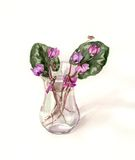Wild cyclamens in the glass watercolor drawing Stock Photography
