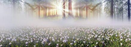 Free Wild Daffodils Stock Photography - 53276542
