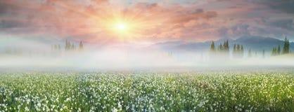 Free Wild Daffodils Stock Image - 53287431