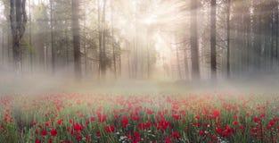 Wild daffodils Stock Photos