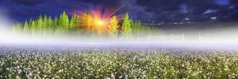 Wild daffodils Royalty Free Stock Photo
