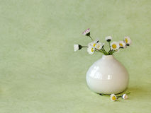 Wild daisies in a little vase. Fresh picked bouquet of daisies and put in a small white vase Stock Photo
