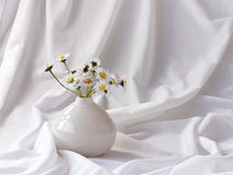 Wild daisies in a little vase. Fresh picked little white daisies in a small white vase Stock Photography