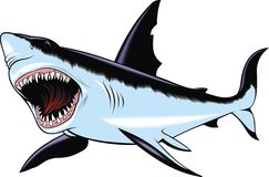 Wild dangerous shark Stock Images