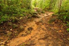Wild Darien jungle stock photography