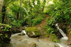 Wild Darien jungle Stock Images