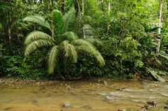 Wild Darien jungle royalty free stock images
