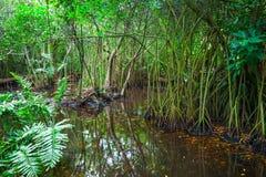 Wild dark tropical forest landscape Stock Image