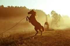 Wild das Pferd Lizenzfreies Stockbild