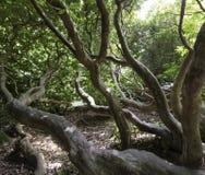 Wild deel van Shefield-Meer - Uckfield, het Verenigd Koninkrijk royalty-vrije stock foto