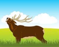 Wild deer on field Royalty Free Stock Photo