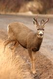 Wild deer in the wild. A buck in the wild side profile stock photo