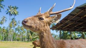 Wild deers on island. Stock Image