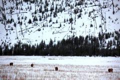 Wild deers outdoors Stock Photo