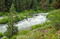 Wild Deschutes River. Deschutes River, near Bend, Oregon rushing past a tree stock photography