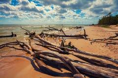 Wild desert beach with fallen trees Stock Photo