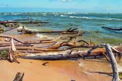Wild desert beach with fallen trees Royalty Free Stock Image