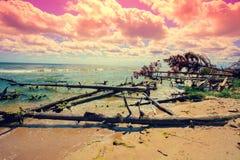Wild desert beach with fallen trees Stock Photos