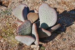 Wild desert cactus Stock Photo