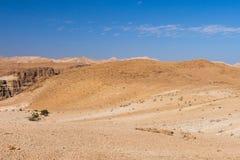 Wild desert goats herd. Royalty Free Stock Photos