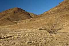 Wild desert-like landscape in the Richtersveld Royalty Free Stock Photos