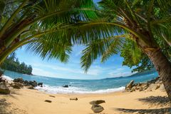 Wild deserted beach with coconut palms. Fisheye shot. Phuket, Th Stock Image