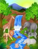 Wild dier in de aard Stock Foto