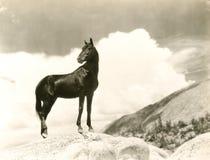 Wild Ding royalty-vrije stock fotografie