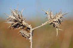 Wild distel en wespnest Stock Foto's