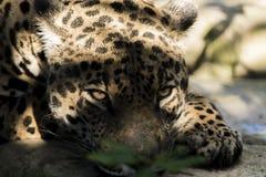 wild djur Fotografering för Bildbyråer