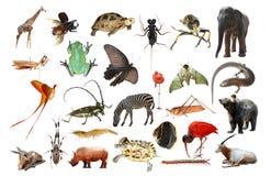 wild djur samling Arkivbild