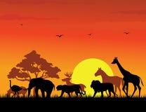wild djur silhouette Arkivfoton