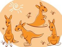 wild djursamlingskängurur Arkivfoto
