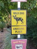 Wild Dog Crossing royalty free stock photography