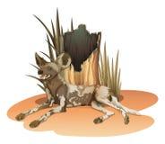 A wild dog near the stump. Illustration of a wild dog near the stump on a white background Stock Photos