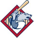 Wild dog wolf player baseball bat. Illustration of a cartoon Wild dog or wolf playing baseball batting with bat set inside a diamond Royalty Free Stock Photos