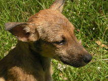 Wild dogs in the park Stock Photos