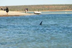 Wild Dolphin royalty free stock image