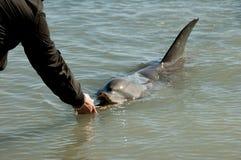 Wild Dolphin stock photo