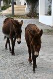 Wild donkeys Stock Photo