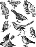 Wild drawn birds Royalty Free Stock Photography