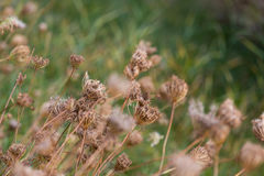 Wild dried flowers on the field Stock Photo