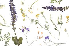 Wild dried meadow flowers on white background. Top view royalty free stock photography
