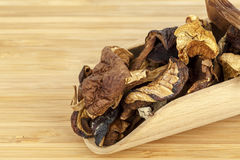 Wild dried mushrooms Stock Photography