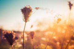 Wild dry plants on autumn meadow stock images