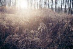 Wild, dry scrub on the meadow. Stock Image