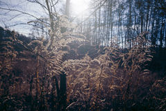 Wild, dry scrub on the meadow. Royalty Free Stock Images
