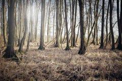 Wild, dry scrub on the meadow. Royalty Free Stock Photos