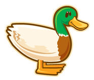 Wild duck. Vector without gradients, great for printing Stock Photo