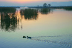 Wild duck Lake. Very beautiful sunset under the Wild duck lake Royalty Free Stock Image